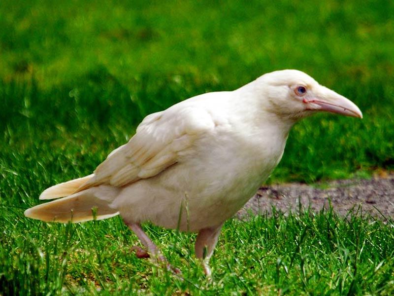 шоу редкая белая ворона фото как
