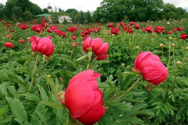 Фото: Ботанический сад имени Гришко