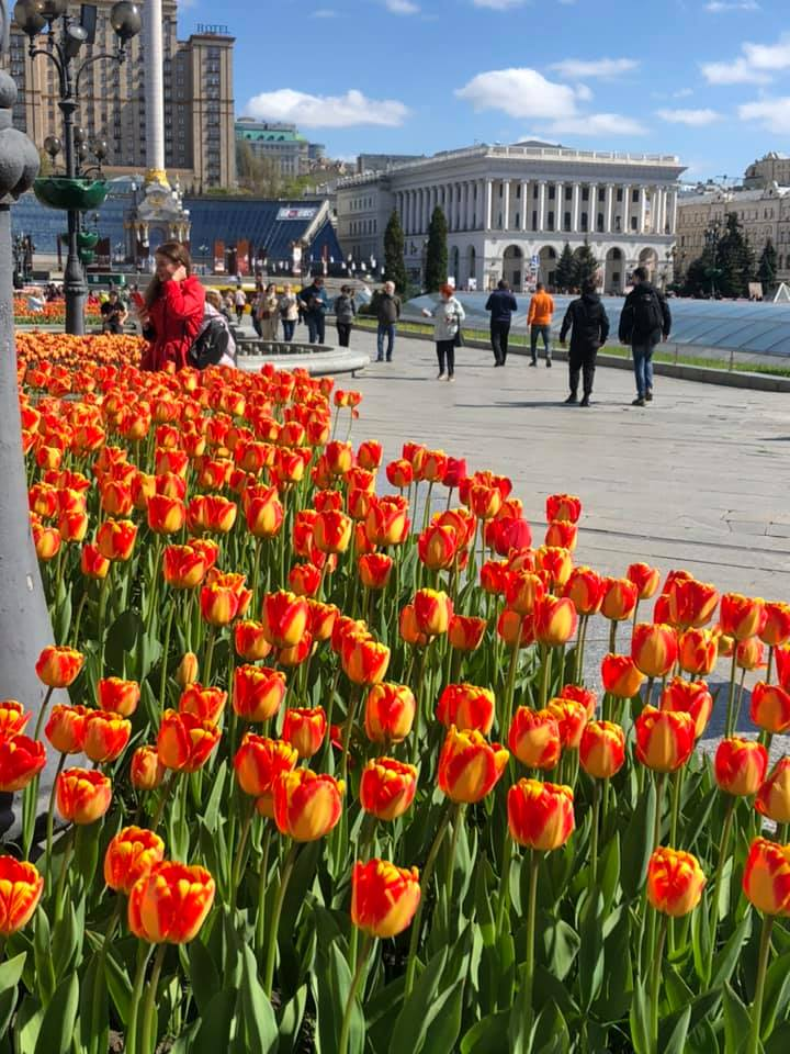 Тюльпаны в центре Киева. Фото: Facebook Алексея Короля